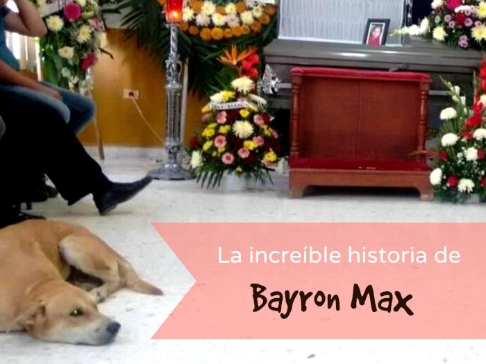 Bayron Max, el perro que recorrió millas y llegó al funeral de su dueña