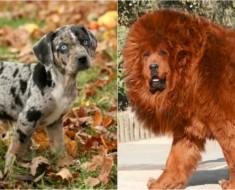 razas-raras-perros-euroresidentes