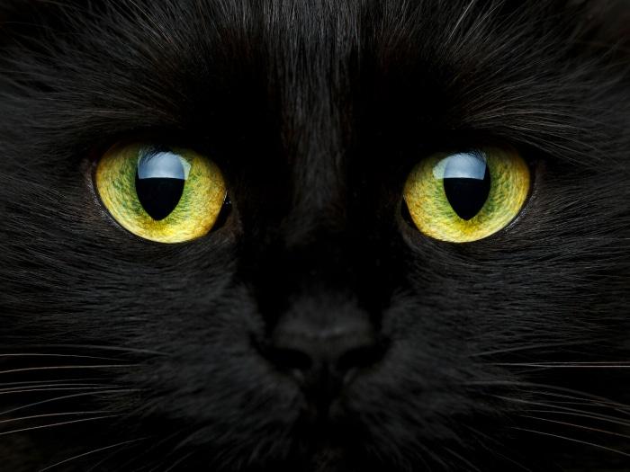 Curiosidades interesantes Gatos Negros