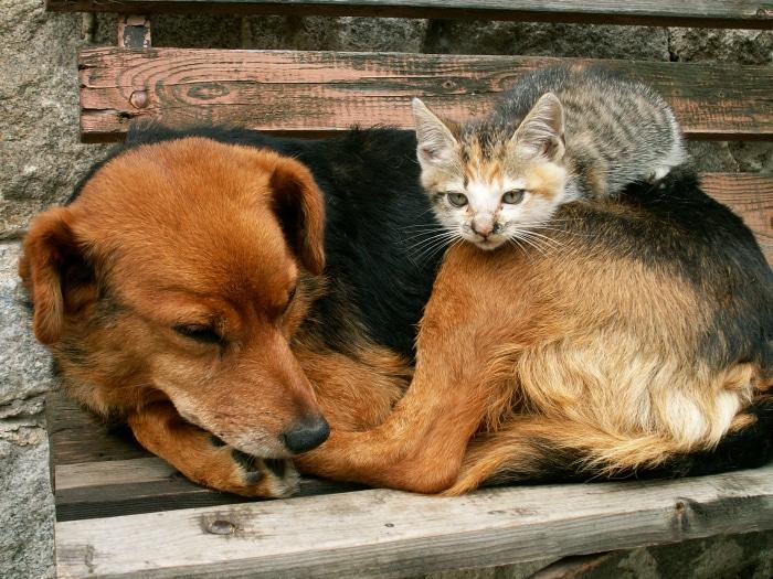 Gatos durmiendo encima de perros