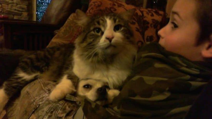 Gato encima de perro