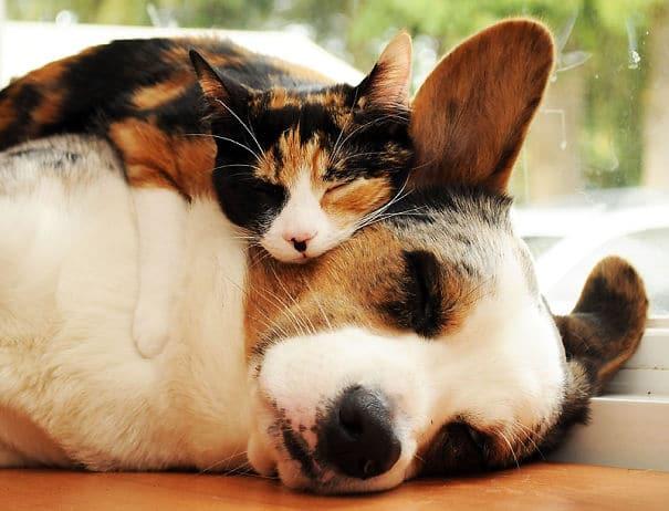 Gato dormido encima de perro