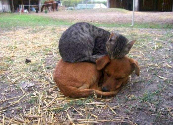 Gato durmiendo encima de perro