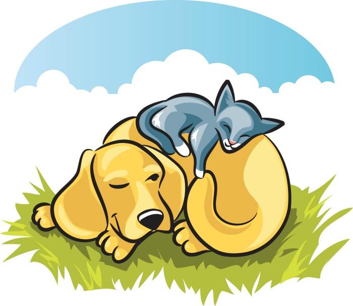 Gatos duermen encima de perros