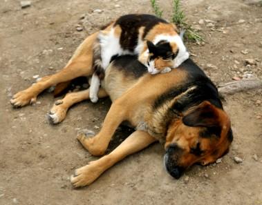 Gato duerme arriba de perro