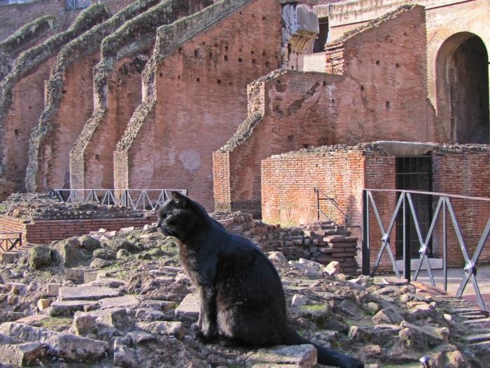 Gatos negros curiosidades