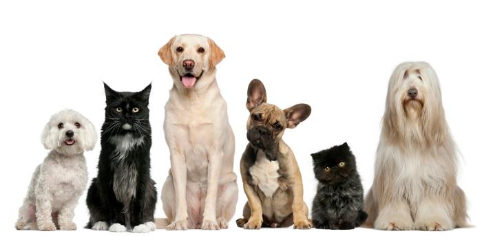 Nombres diferentes para animales de compañía