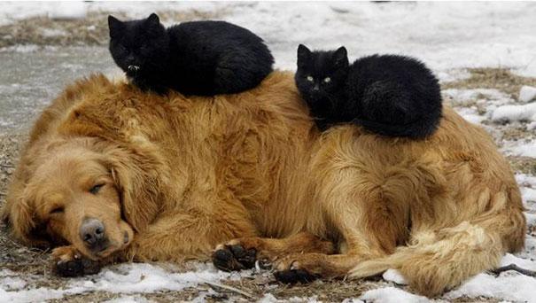 Gatos durmiendo encima de perro