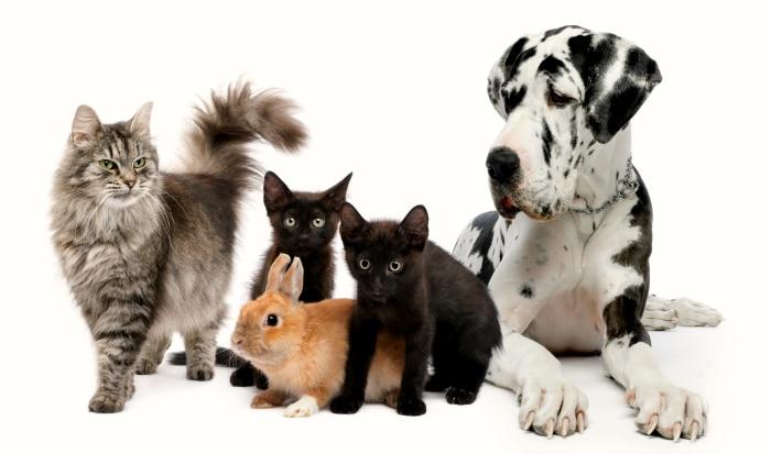 Nombres para animales distintos y raros
