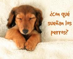 Con qué sueñan los perros