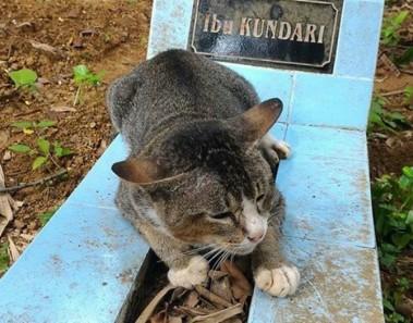 Gata vive y no se separa de la tumba de su humana