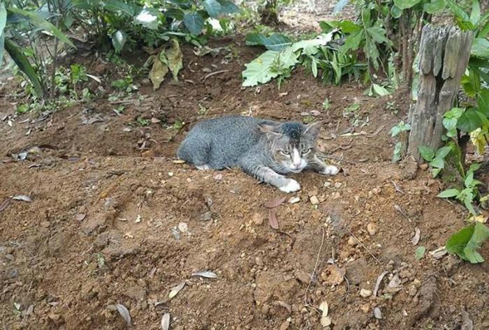 Gata acostada al lado de la tumba de su dueña