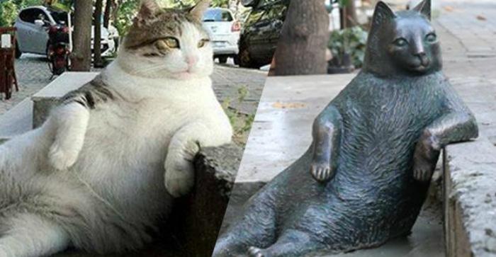Gato meme famoso sentado estatua