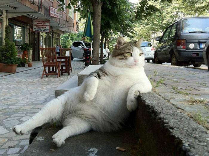 Gato famoso Estambul meme estatua