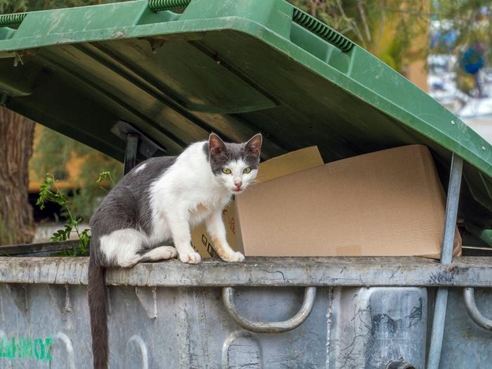 España multará abandonos de mascotas hasta con 30 mil euros