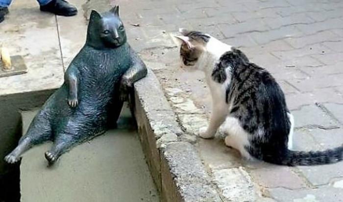 Gato estambul meme sentado