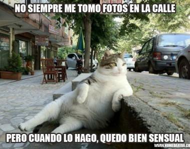 Gato memes sentado famoso estambul estatua