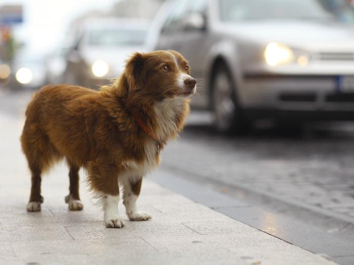 España multará hasta con 30.000 euros abandono y maltrato de perros