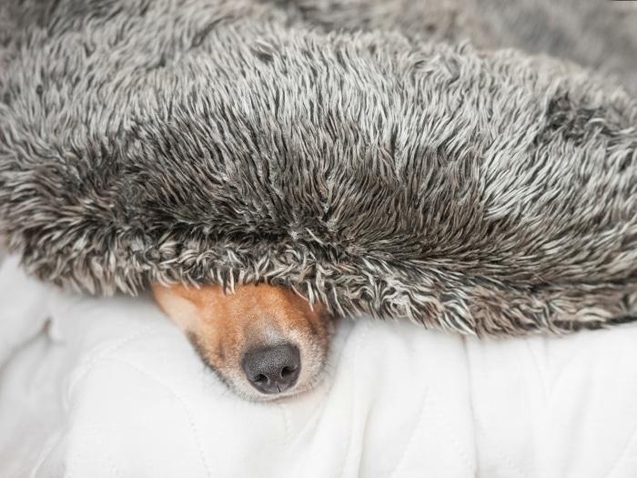 Consejos calmar perro fuegos artificiales