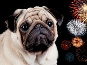 Trucos y consejos para calmar a un perro cuando hay fuegos artificiales