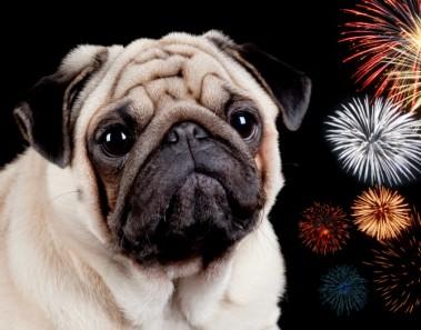 Truco calmar perros fuegos artificiales