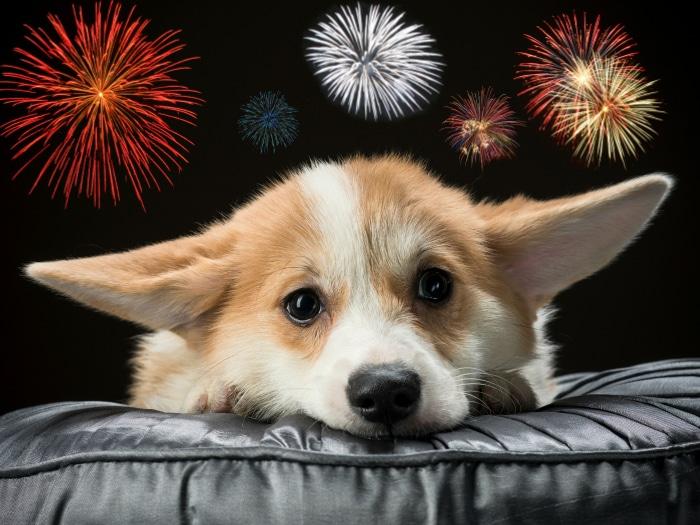 Truco calmar perros durante fuegos artificiales