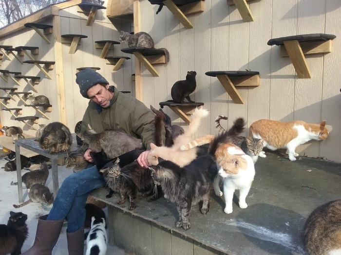 hombre crea santuario gatos