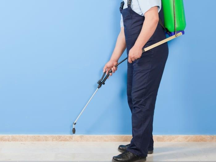 C mo eliminar las pulgas en casa y evitar su reaparici n - Exterminar pulgas en casa ...