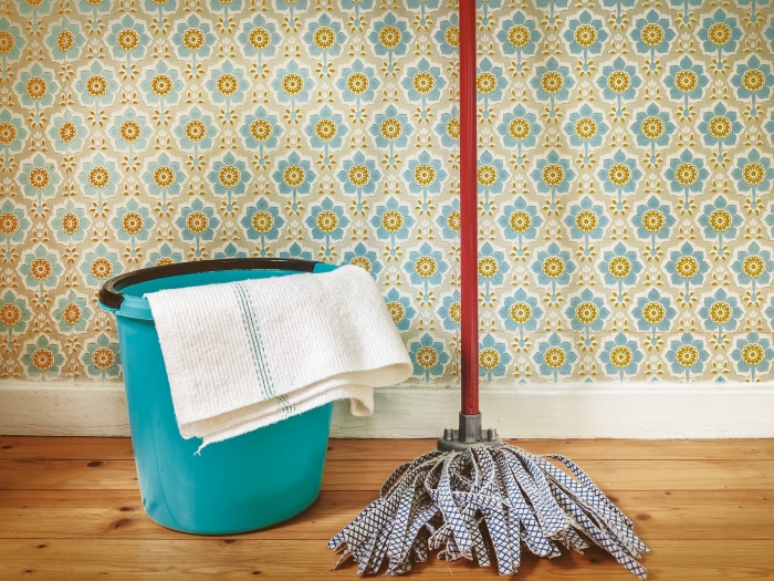Limpieza e higiene hogar pulgas