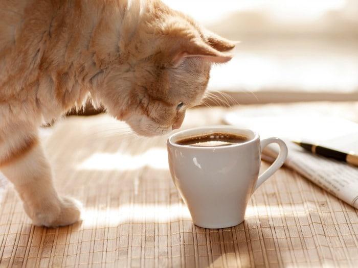 Alimentos perjudiciales gatos