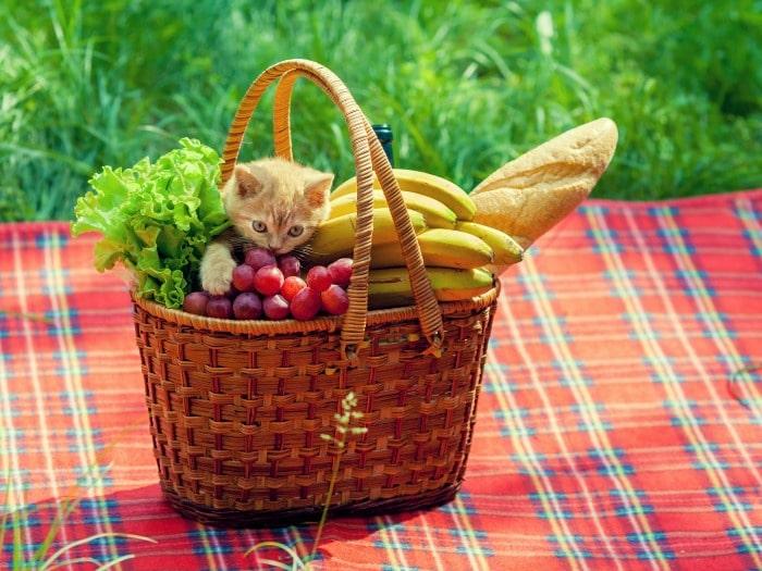 Alimentos dañinos para los gatos
