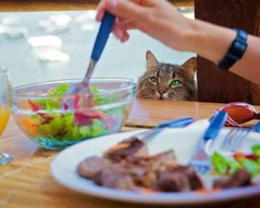 Alimentos dañinos o malos para gatos