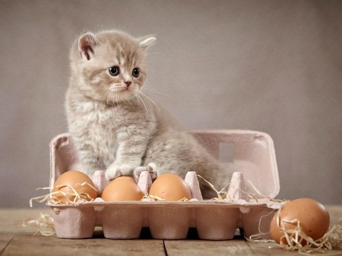 Alimentos no indicados para gatos