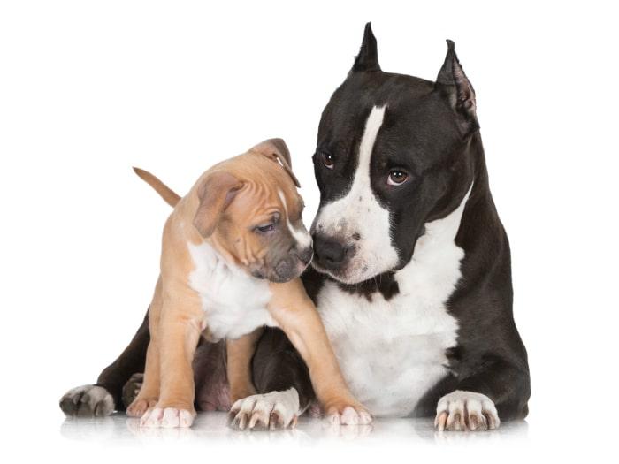 España prohíbe operaciones estéticas perros