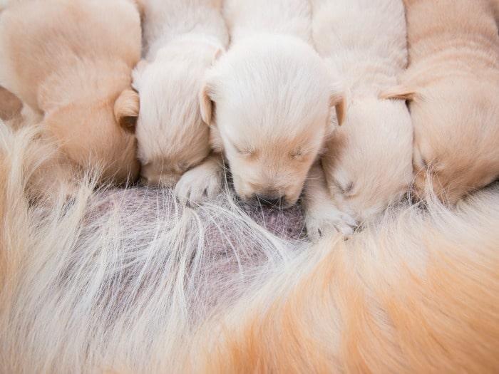 Grandes mitos sobre los perros