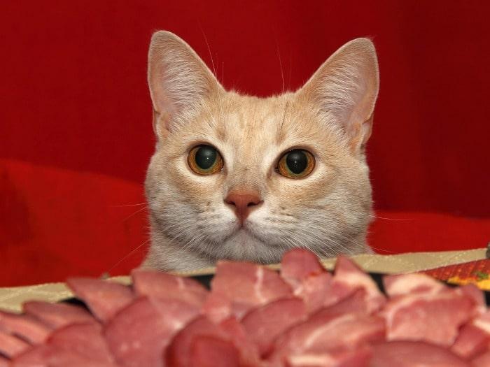 Alimentos no recomendados para los gatos
