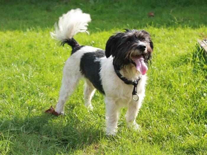 famosos mitos sobre perros