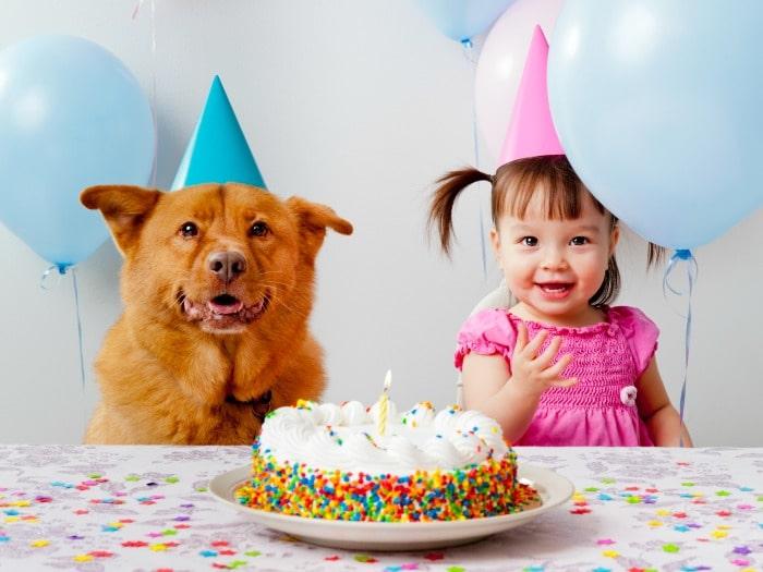 Mitos sobre perros, verdad o mentira