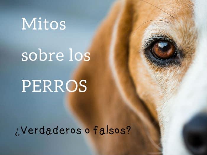 Mitos y dichos sobre los perros