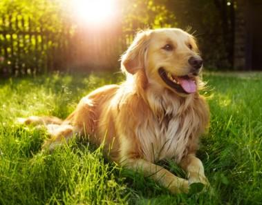 Mitos sobre los perros