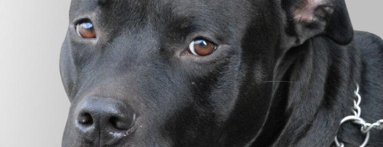 No más orejas ni colas cortadas en perros