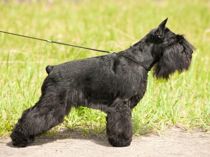 No operaciones estéticas en perros