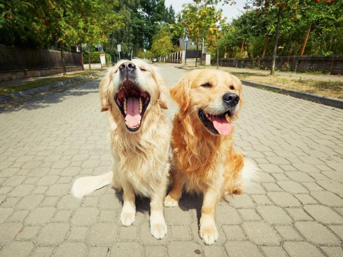 Consejos evitar mal aliento perros