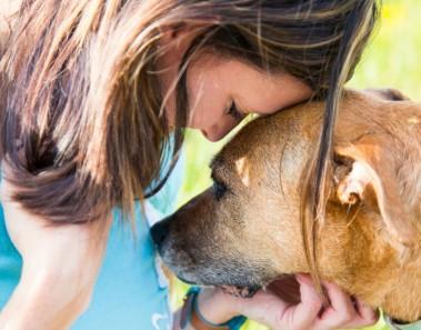 Los perros sienten el dolor humano