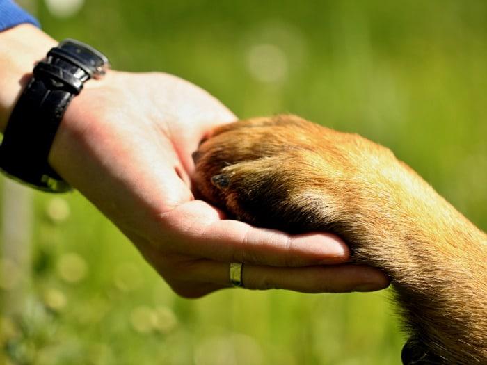 perros sienten emociones hacia humanos
