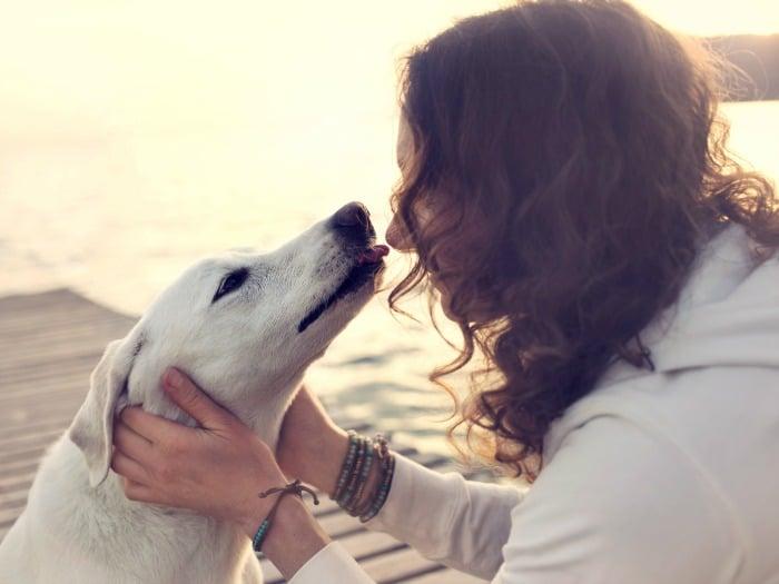 Perros sienten dolor y sentimientos personas