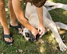 Cómo actuar si tu perro se atraganta