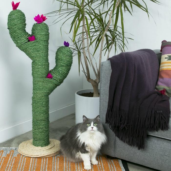 Rascadores originales gatos cactus