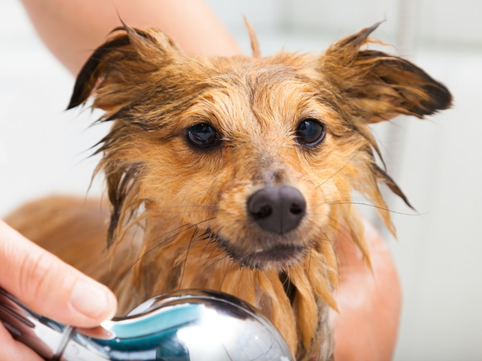 how to wash dog
