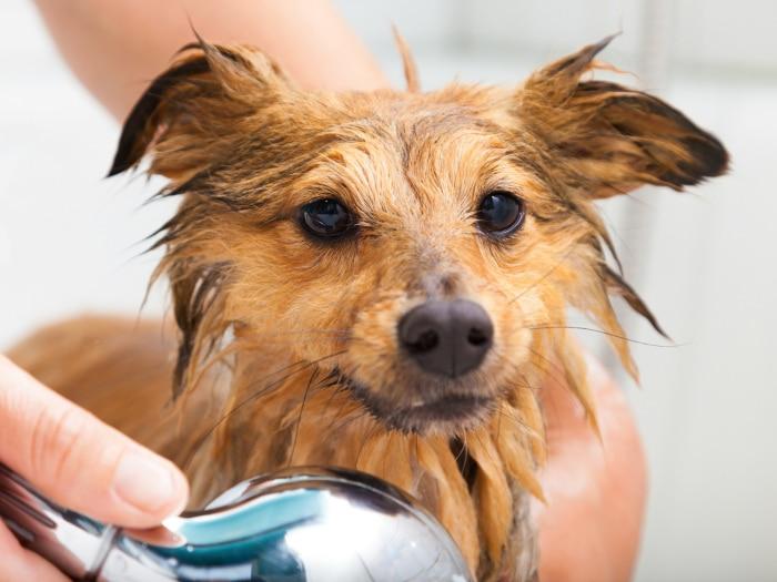 como lavar perro
